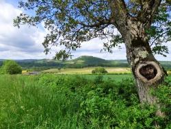 Week-end à Vezelay