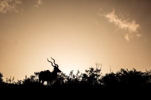 Visioconférence Cinq mois en Afrique Australe