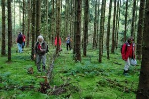 Randonnée en forêt de Fontainebleau
