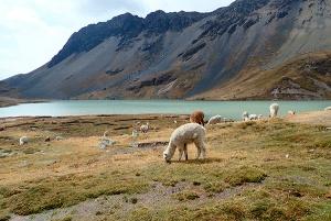 Trek au Pérou
