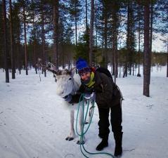 Webinaire Laponie