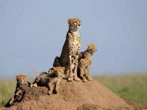 Protection de l'environnement en Namibie