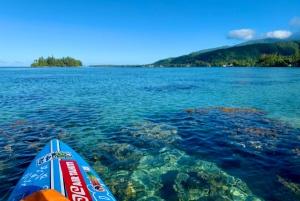 Visioconférence Polynésie