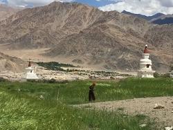 Ladakhi dans un champs d'orge