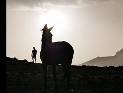 L'âne et le berger