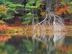 Reflet d'automne - USA