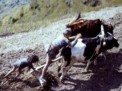 Népal 1978 - Père et fils