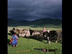 Une fin de journée dans la steppe