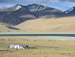 Nomades Ladakhis