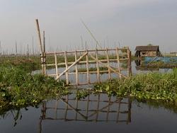 Habitat sur le lac Inlé