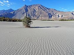 Ladakh-Vallée de la Nubra