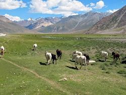 Zanskar-Rangdum