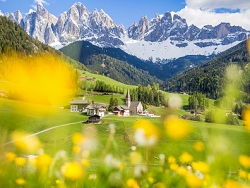 des fleurs et des montagnes